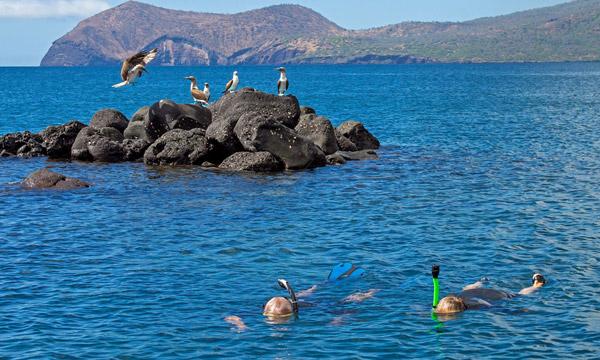 Galapagos Wildlife 5 Days